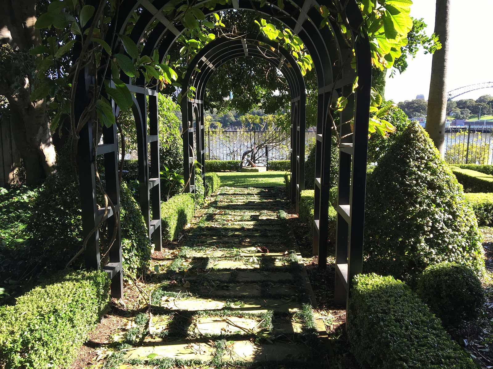 Hedge Maintenance & Pruning Services