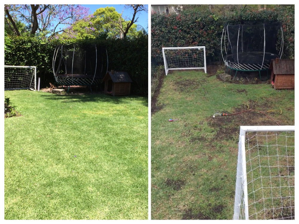 Unhealthy lawn compared to maintained lawn
