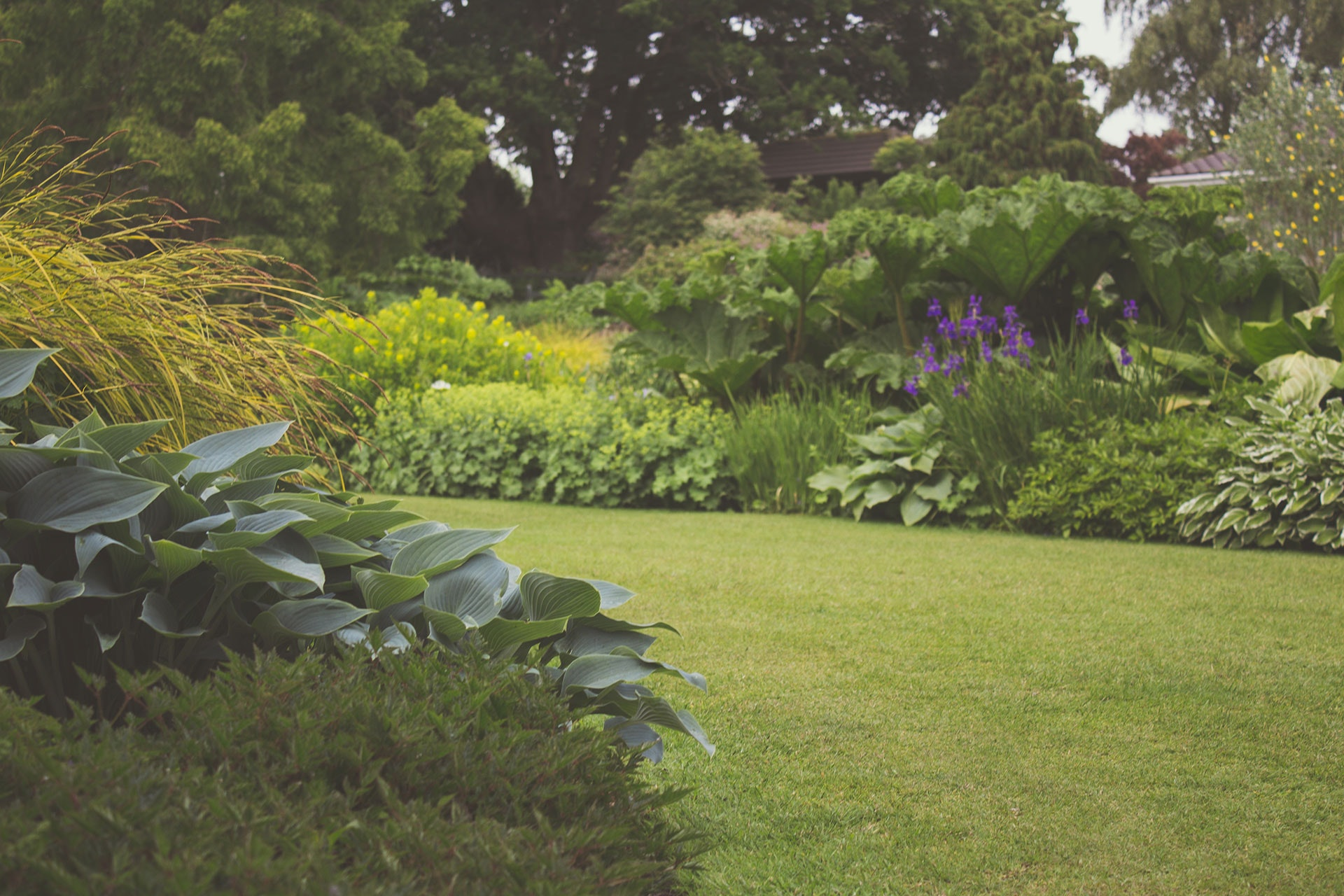 Healthy well maintained garden with numerous green plants and purple flowers