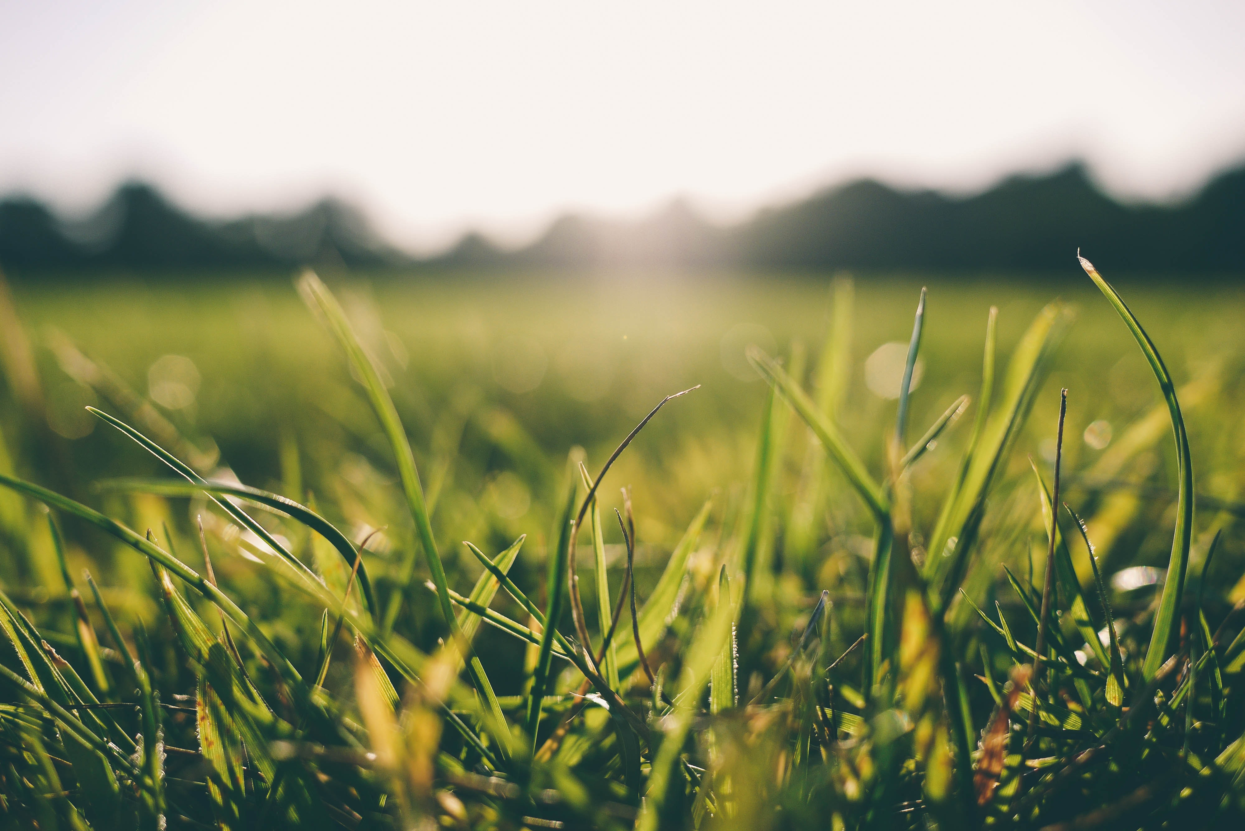 landscape of green grass during early morning.