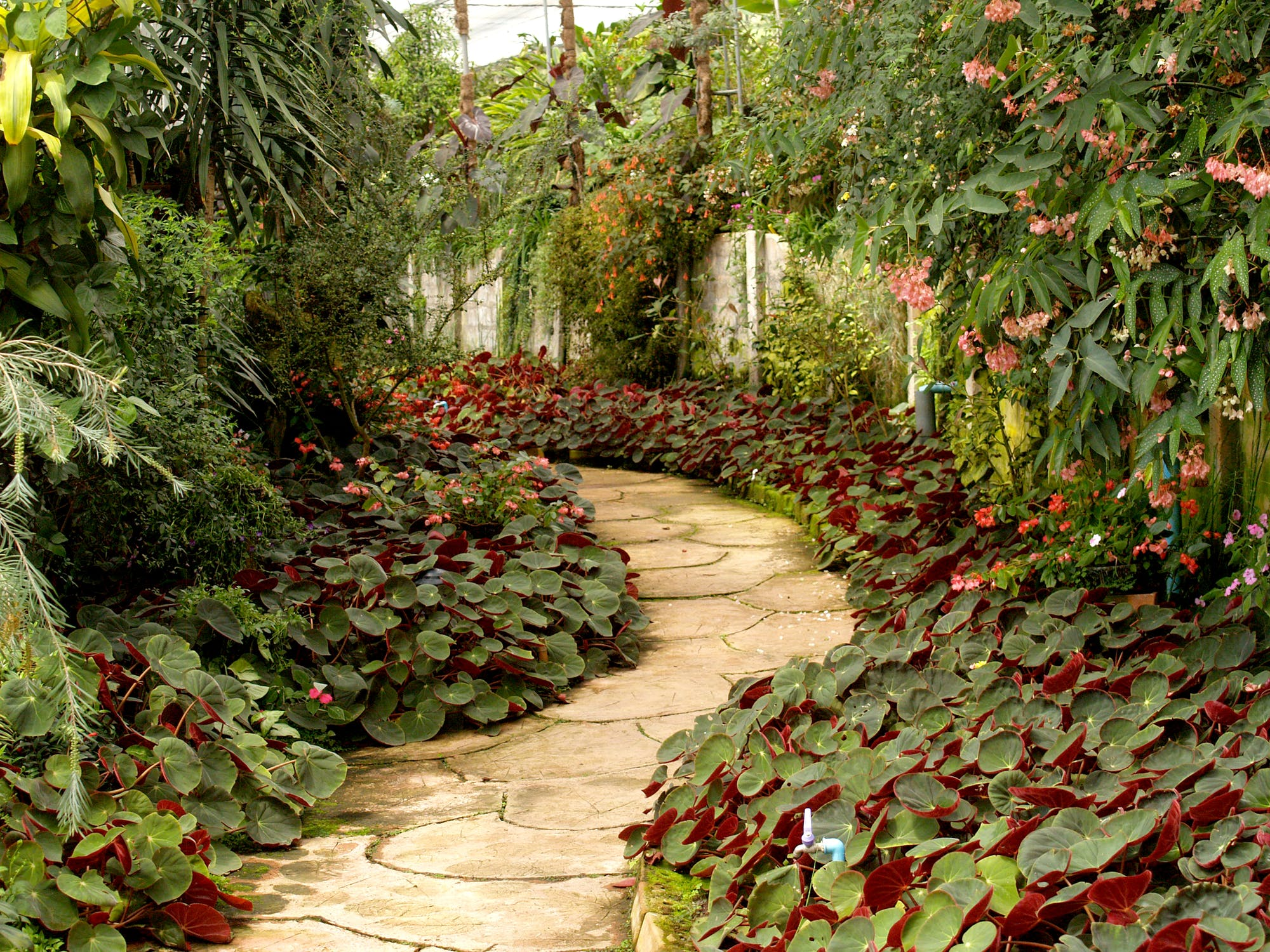garden path lined with green shrubs and trees